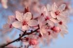 Flor tradicional china